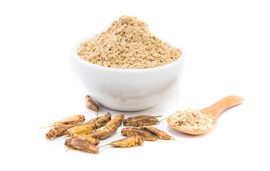 acheta house cricket powder