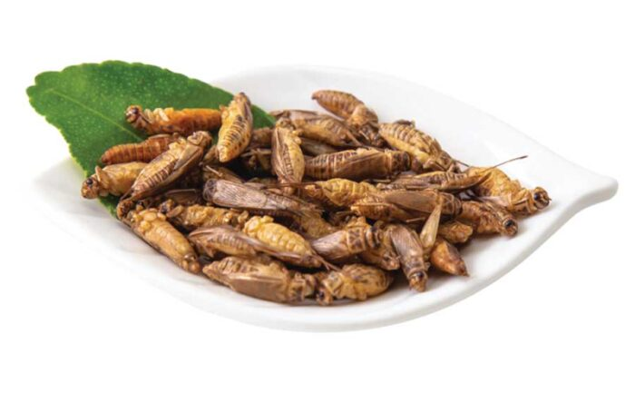 edible acheta crickets