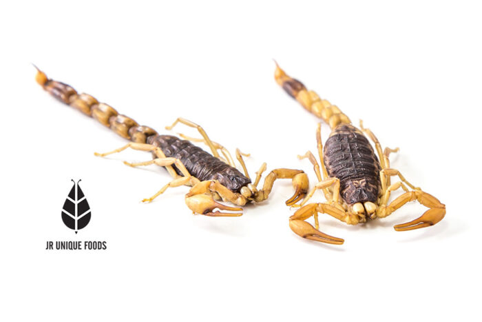 Armor Tail Scorpions for Sale