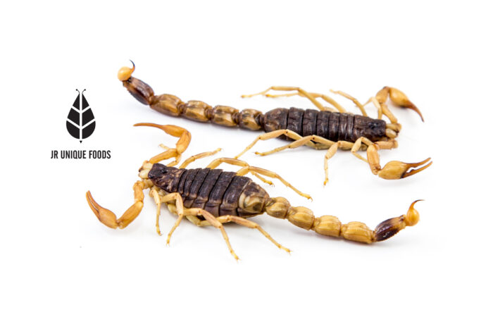 Armor Tail Scorpions Worldwide delivery