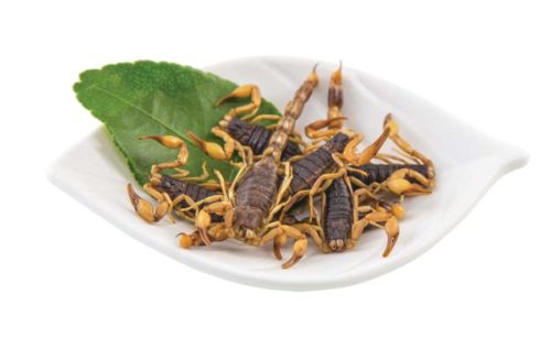 edible armor tail scorpions