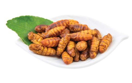 edible silkworm pupae