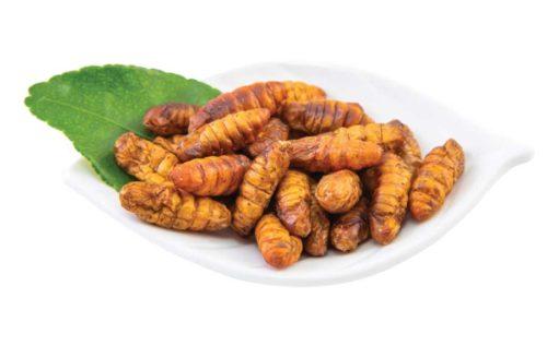 edible silkworm pupae