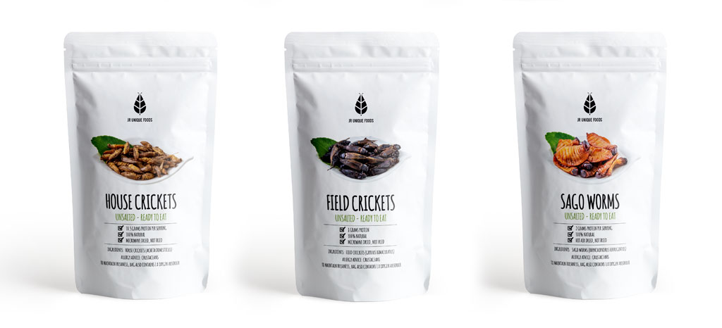 edible insects display